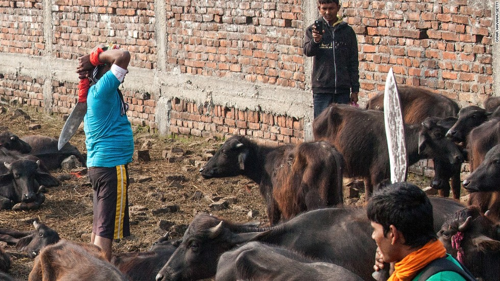 Image contains graphic content. A devotee slaughters a water buffalo while one of his friends records a video on his mobile phone during the celebration of the Gadhimai festival on November 28 in Nepal.