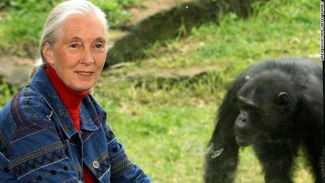 Why Jane Goodall's famous chimps still surprise us - CNN.com