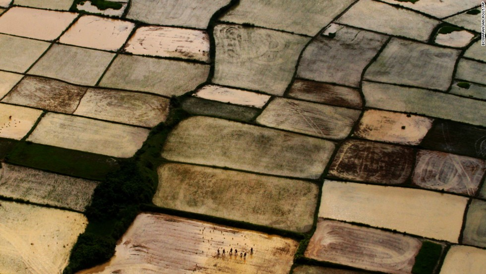 <strong>August 6:</strong> After monsoon rains, farmers replant paddy samplings at a rice field on the outskirts of Bhubaneswar, India.