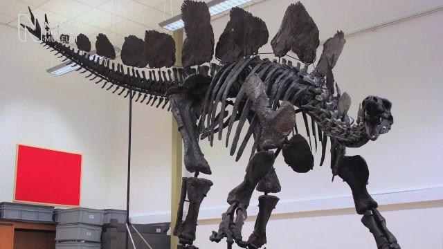 pkg stegosaurus natural history museum time lapse_00003017.jpg