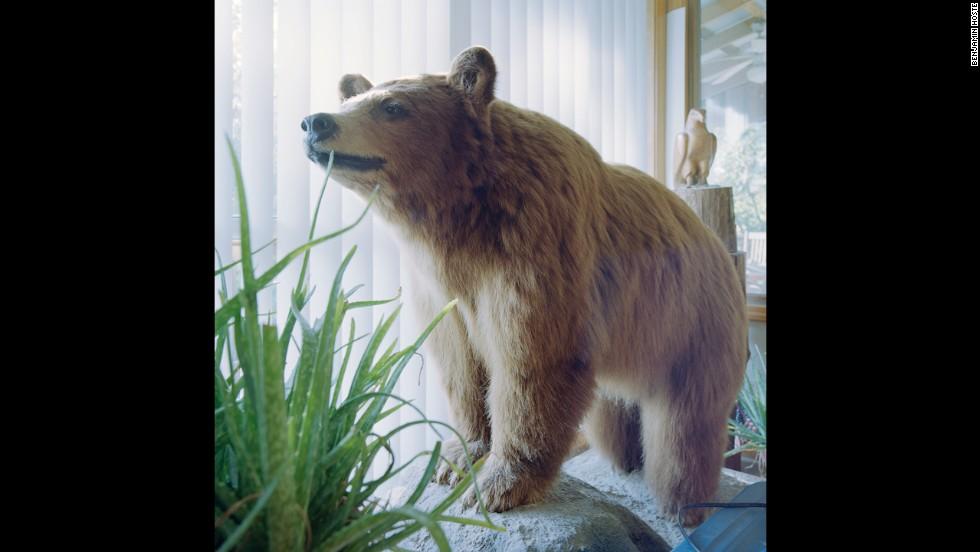 A stuffed Kodiak bear from Colorado is on display in McKinney's Plato home.