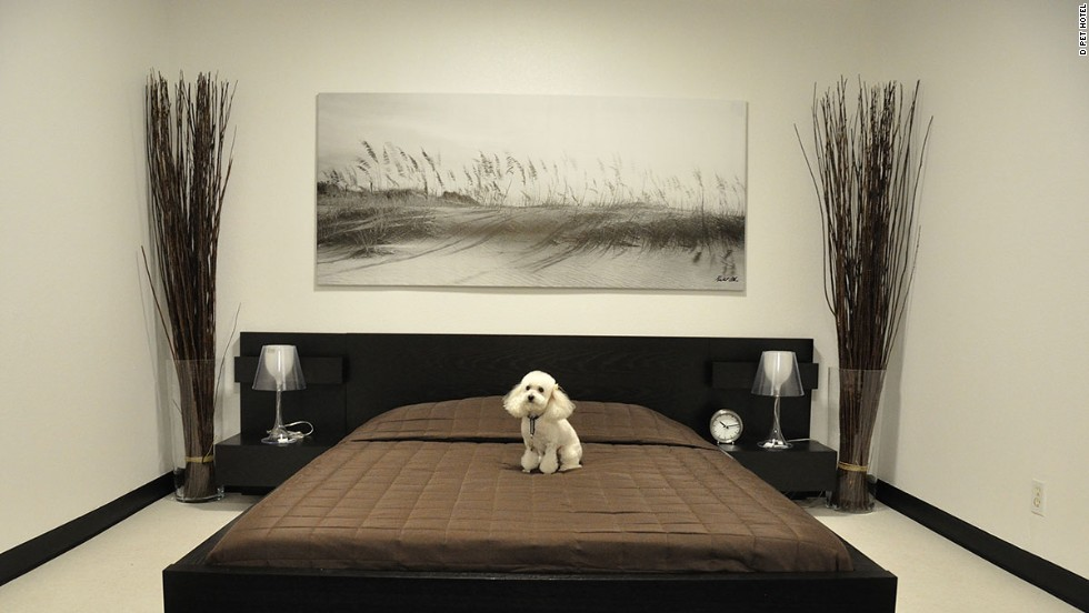 D Pet Hotel in Hollywood offers lavish suites to four-legged visitors...