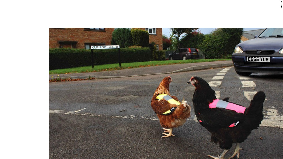 Luminous jackets from UK form Omlet have made roaming the countryside much safer for hens.