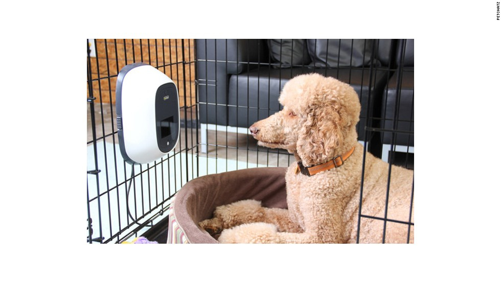 Petchatz enables video calls from anxious owners.