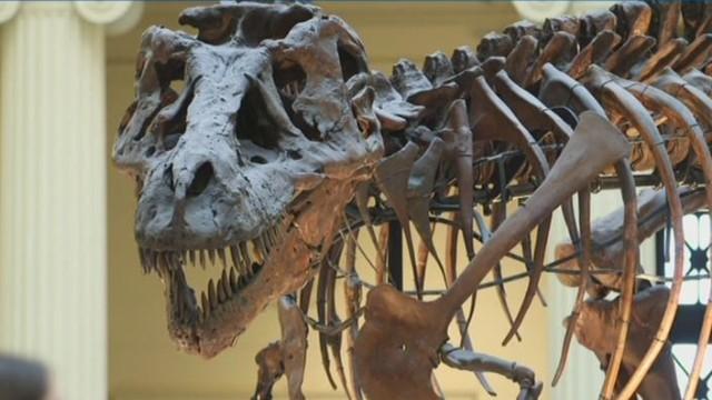 ac the story behind dinosaur 13_00005805.jpg