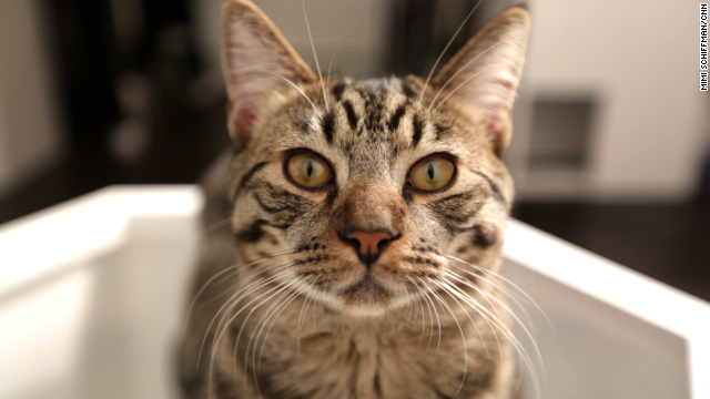 Yep, New York has a cat café