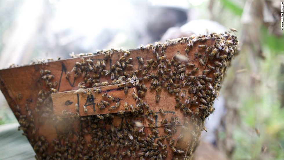 "While beekeeping was not uncommon in the region, it was mainly reserved for the men of the villages, explains Fumsi. ""But I said, 'the women could still do something. They shouldn't just allow them because the man is already on the farm. The woman can have a little piece of it.'"""