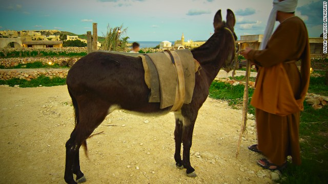 Malta's nativity experience includes grazing live animals.