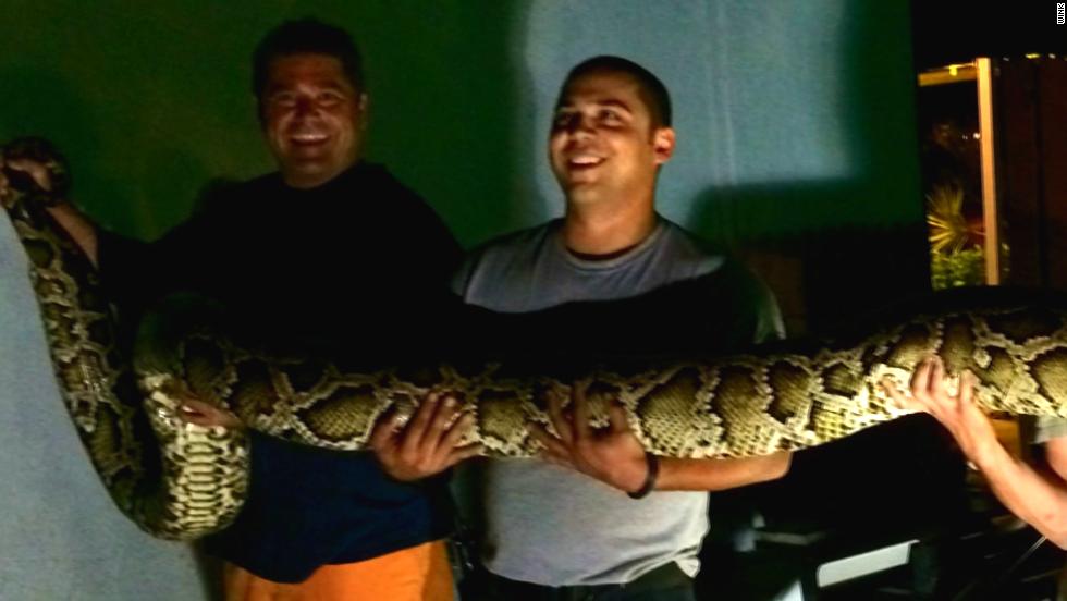 15-foot python found at restaurant