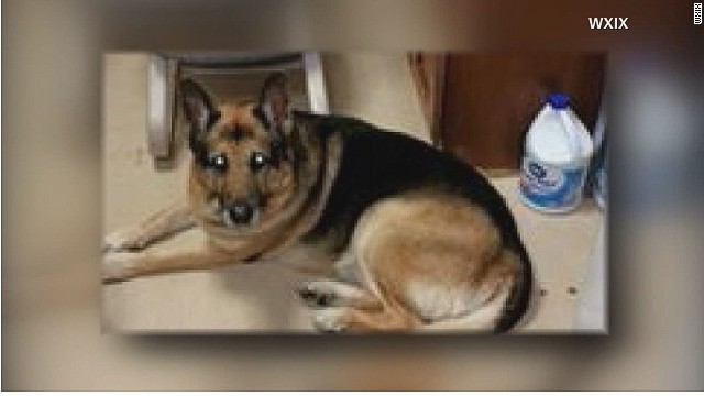 Owner's will says to euthanize dog