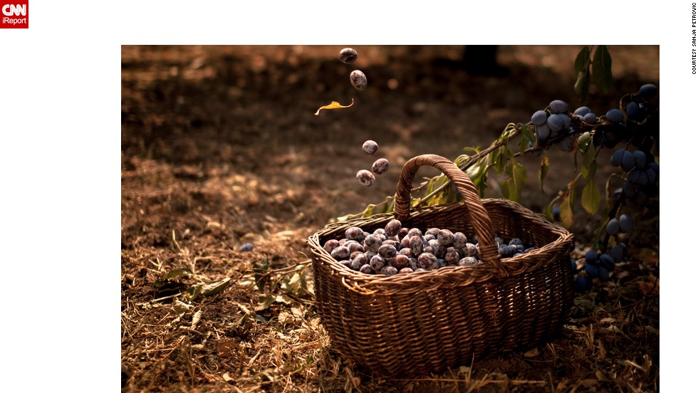 "<strong>Plums:</strong> Serbia is one of the leading plum growers in the  world. Called <a href=""http://ireport.cnn.com/docs/DOC-1191623"">""blue gold,""</a> they are often used to make sljivovica, Serbia's national drink. Sanja Petrovic took this photo of a basket of ripe plums in her godfather's orchard."