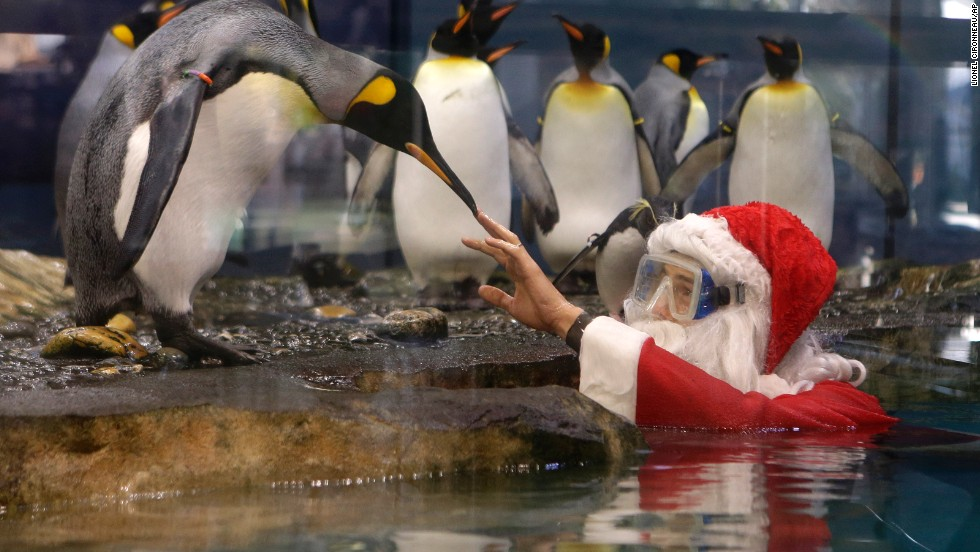 Santa interacts with king penguins at Marineland, an animal exhibition park in Antibes, France, on December 19.
