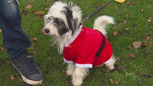 pkg dos santos christmas for pets_00010306.jpg
