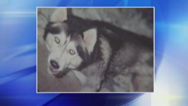 dnt wpxi stolen dog arrest_00004412.jpg