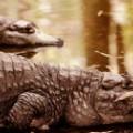 tpod india crocodile irpt