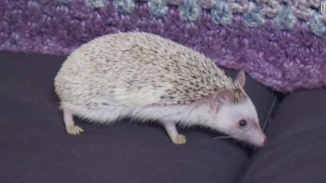 dnt or hedgehog not allowed to fly _00001329.jpg