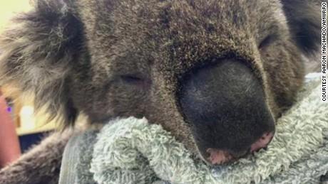 pkg moos koala manicure_00005219