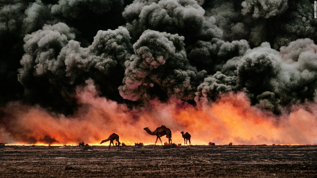 Camels pass burning oil fields during the 1991 Gulf War.