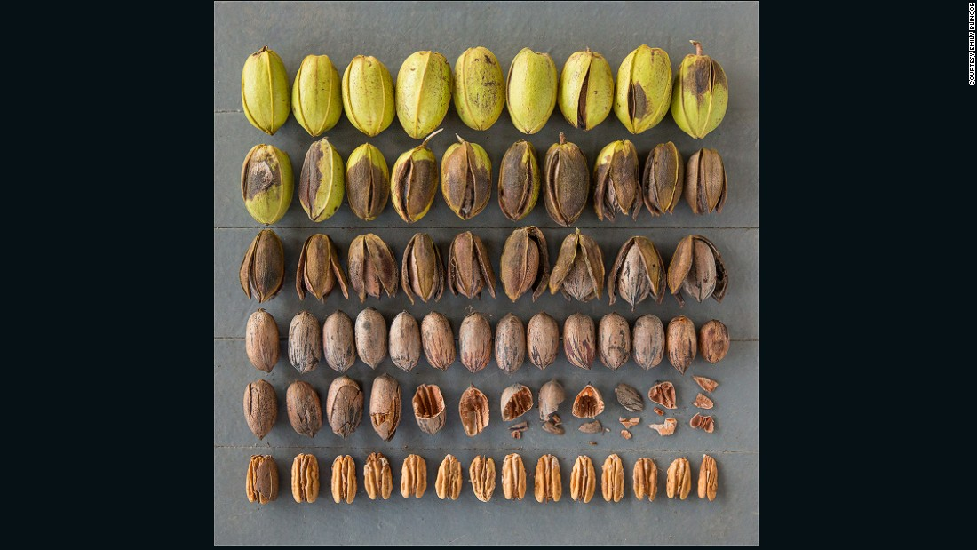 Going forward, she hopes to add a narrative element to the series, as was the case with this image of pecans at different stages of shelling.