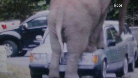 vo elephant crushes car thailand_00005810