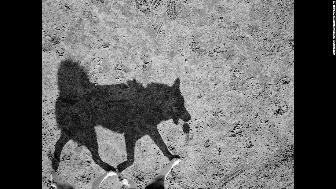 "Thomas Roma spent three years taking photos at a dog park in Brooklyn, New York. ""Their shadows, I felt, revealed a wilder side of their nature,"" the 64-year-old photographer said."
