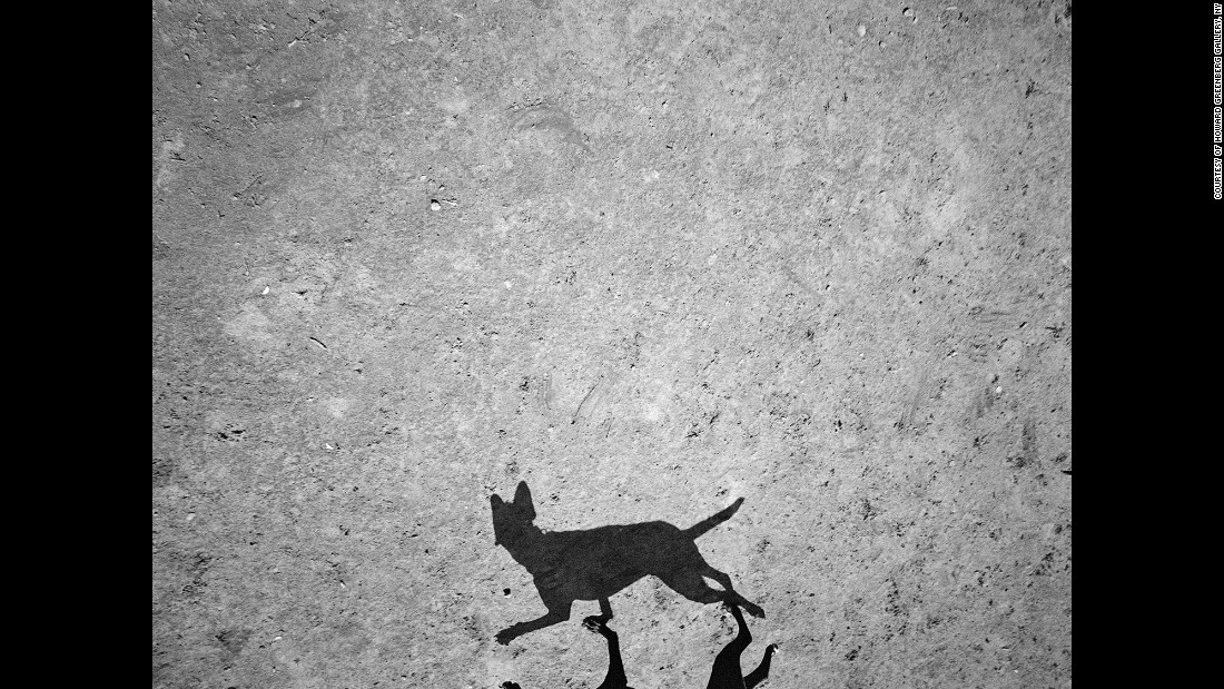 The images were taken at Dyker Beach Park. Roma mounted a camera to the end of a pole, raising it up to 7 feet to take photographs of the dogs and their shadows.
