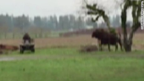 pkg bull attacks man oregon_00005514