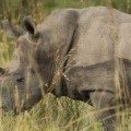 rhino kruger south africa