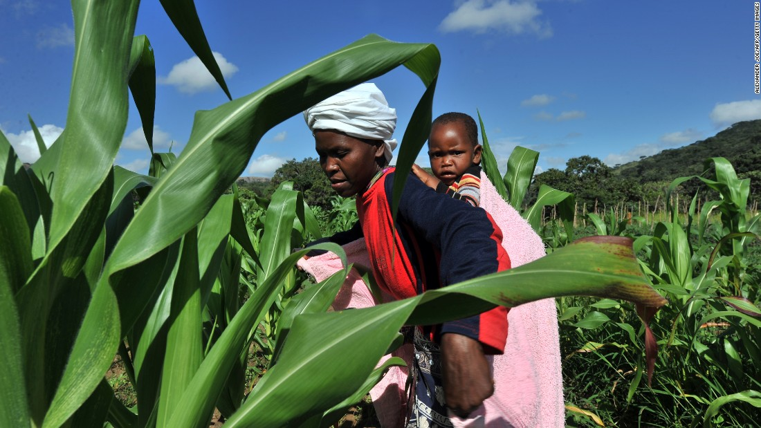 Whether it's undernourishment or obesity, there are solutions for countries wanting to tackle issues related to poor diets -- looking at where research and development grants go, is but one example, as much of this money typically goes to increasing the yields of rice, maize and wheat, Haddad says. <br /><br />Pictured here, a woman checks maize crops on a farm in Zimbabwe.