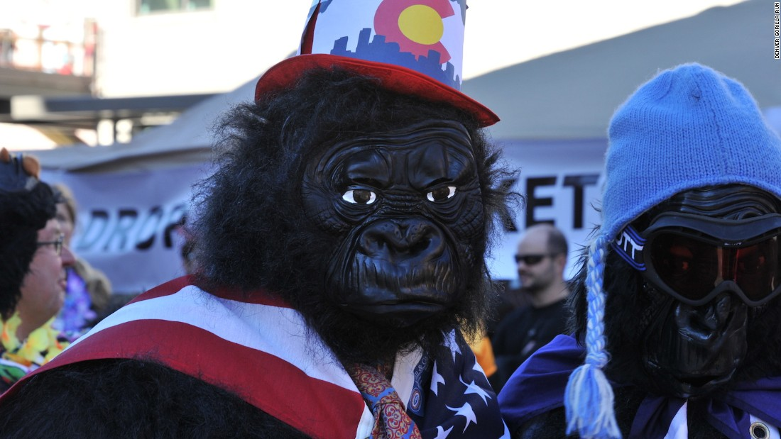 In this annual race, thousands of gorilla suit-wearing humans run five kilometers around Denver's city center to raise funds for the Mountain Gorilla Conservation Fund.