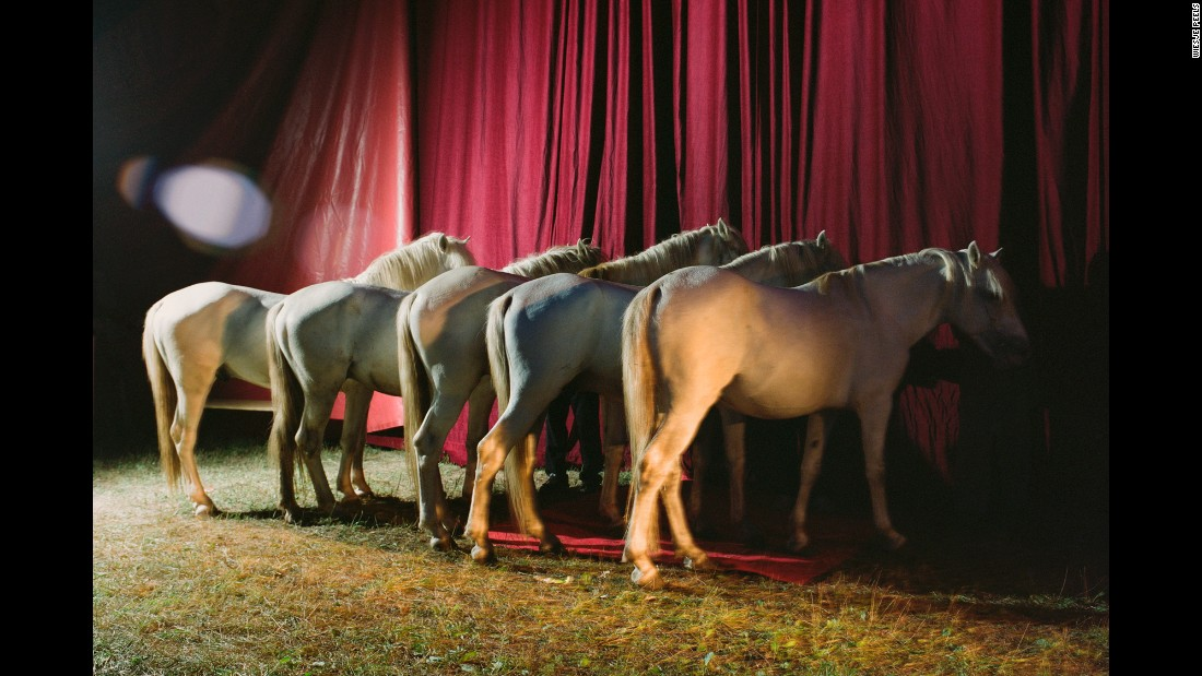 Horses line up for a performance in Italy.