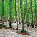 unesco shirakami beech forest