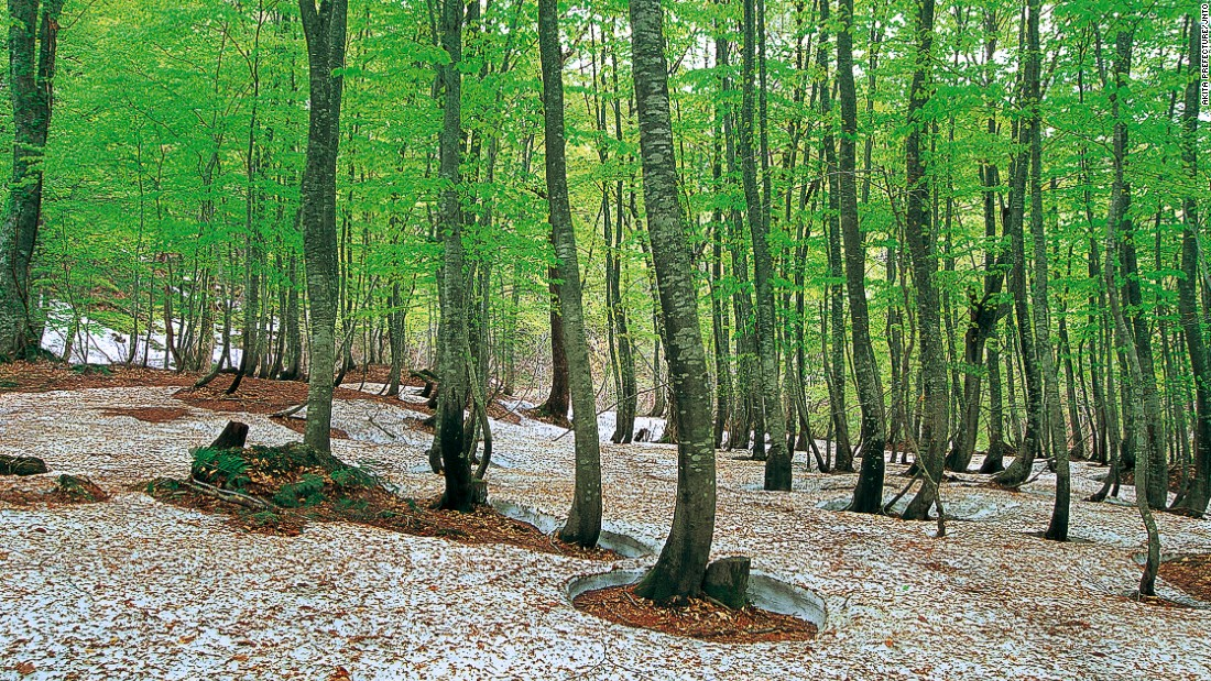The core of Shirakami-Sanchi in the mountains of northern Honshu is the last of the Siebold's beech forest that once dominated the slopes of northern Japan. The largest in East Asia, the untouched beech forest has very few visitors, partly due to permit requirements and lack of man-made facilities.