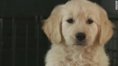 erin pkg moos puppy ad pulled_00020117