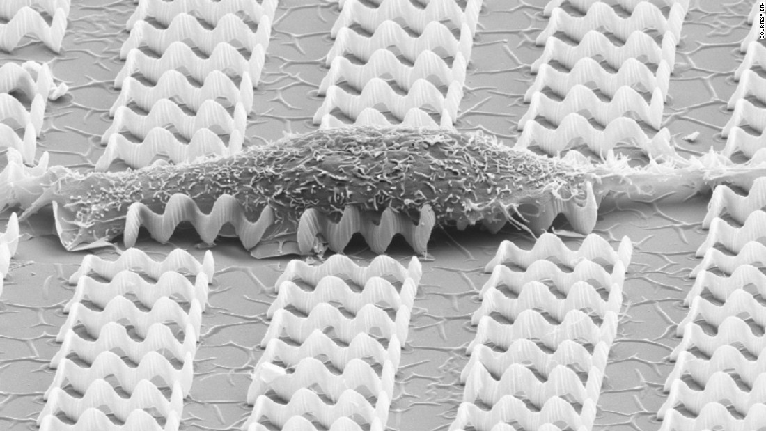 A muscle cell resting on a bed of nanobots.
