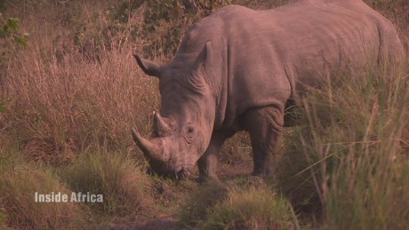 Reintroducing rhinos to Uganda