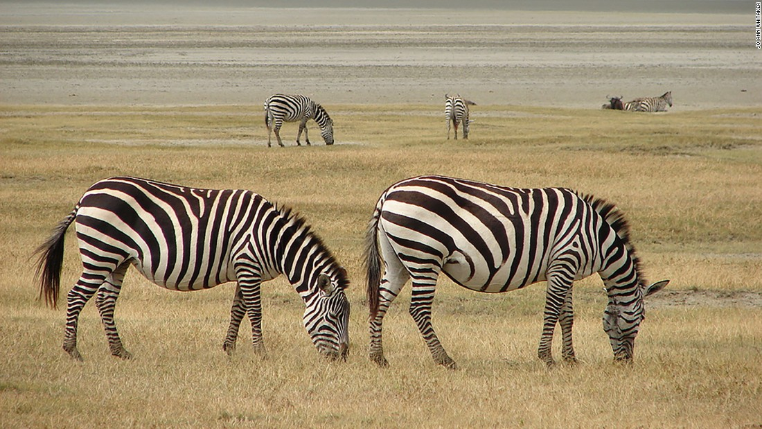 Located in northern Tanzania and spilling into nearby Kenya, where the conservation area is known as the Masai Mara, this iconic savannah hosts the annual migration of 2 million wildebeest, zebra and gazelle followed by their predators, in search of pasture and water.