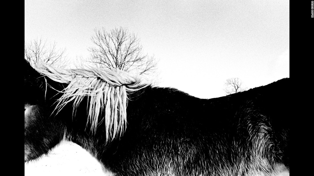 A horse's mane fluttters in the winter wind.