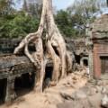13. Angkor Ta Prohm.