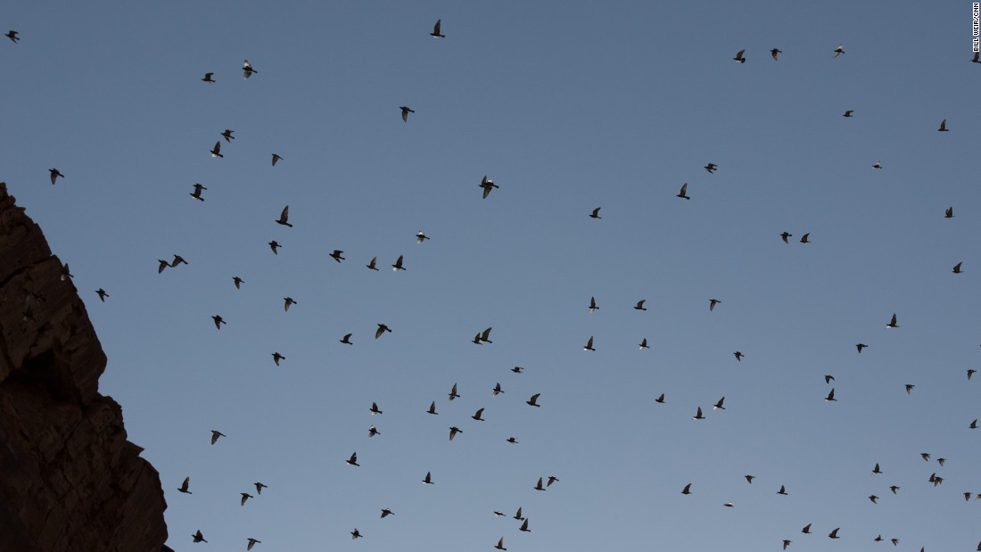Hundreds of birds flock above the cliffs of Wadi Mujib near the Dead Sea in Jordan.