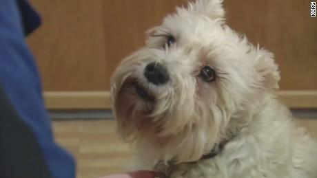 dnt cedar rapids iowa dog walks several blocks to find owner in hospital _00010917