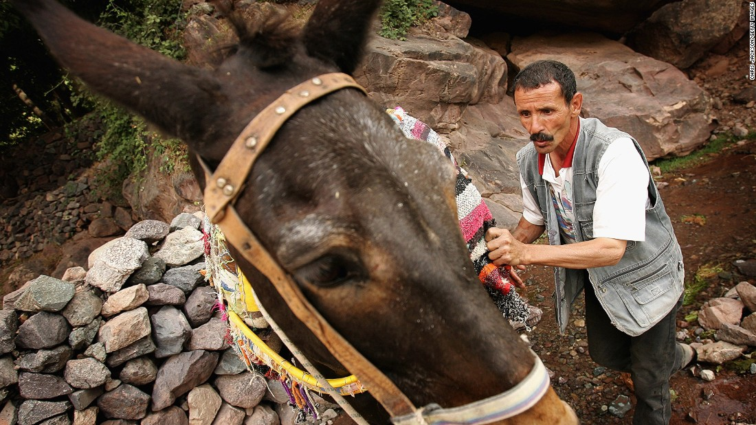 Muleteer Lachan Idiali is one of many Berbers whose income relies on visiting tourists. He makes his living by providing a service to visiting tourists and mountaineers who trek through the High Atlas.