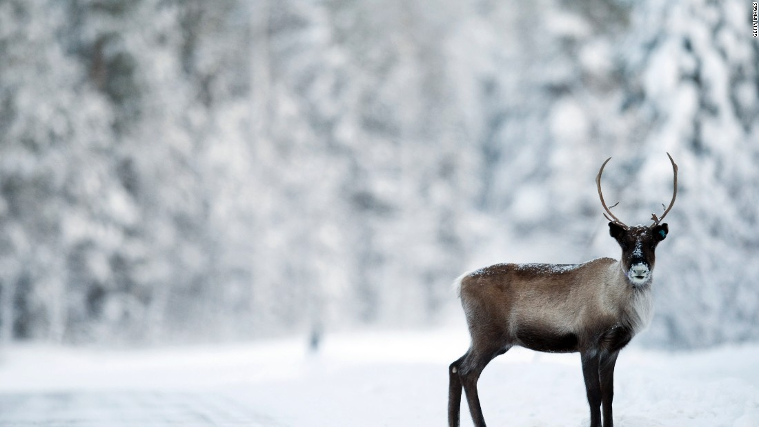 Other projects are looking at connecting other species, such as reindeer.