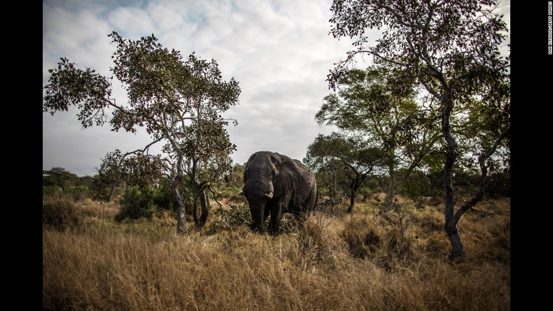"Spot the elephant at <a href=""http://www.sanparks.org/parks/kruger/default.php/"" target=""_blank"">Kruger National Park</a>, South Africa's premier wildlife park.<strong> </strong>The rest of the Big Five you should be on the lookout for: buffaloes, leopards, lions and rhinos."