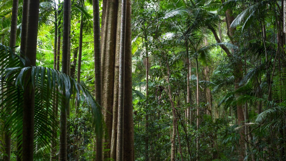 "The spectacular Gondwana Rainforests can be explored in <a href=""http://www.nationalparks.nsw.gov.au/wollumbin-national-park"" target=""_blank"">Wollumbin National Park </a>in New South Wales, Australia."