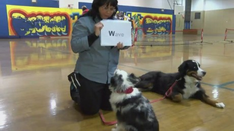 Dogs trained to read