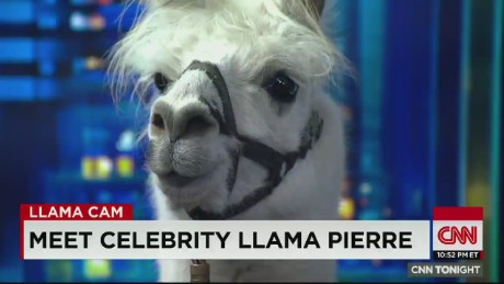cnn tonight pierre the llama live with don lemon _00005319.jpg