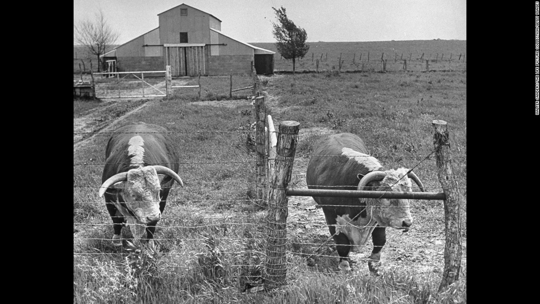"Before <a href=""http://invent.org/inductee-detail/?IID=269"" target=""_blank"">Joseph Glidden's invention</a>, there wasn't a practical way for American ranchers to contain their cattle. Barbed wire solved that problem. It was easy to install and a pretty inexpensive fencing option. It made cattle stay within their property and kept trespassers away."