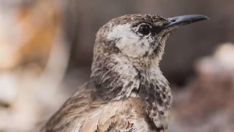 cnn wonder-list bill weir galapagos islands worlds rarest bird_00010413.jpg