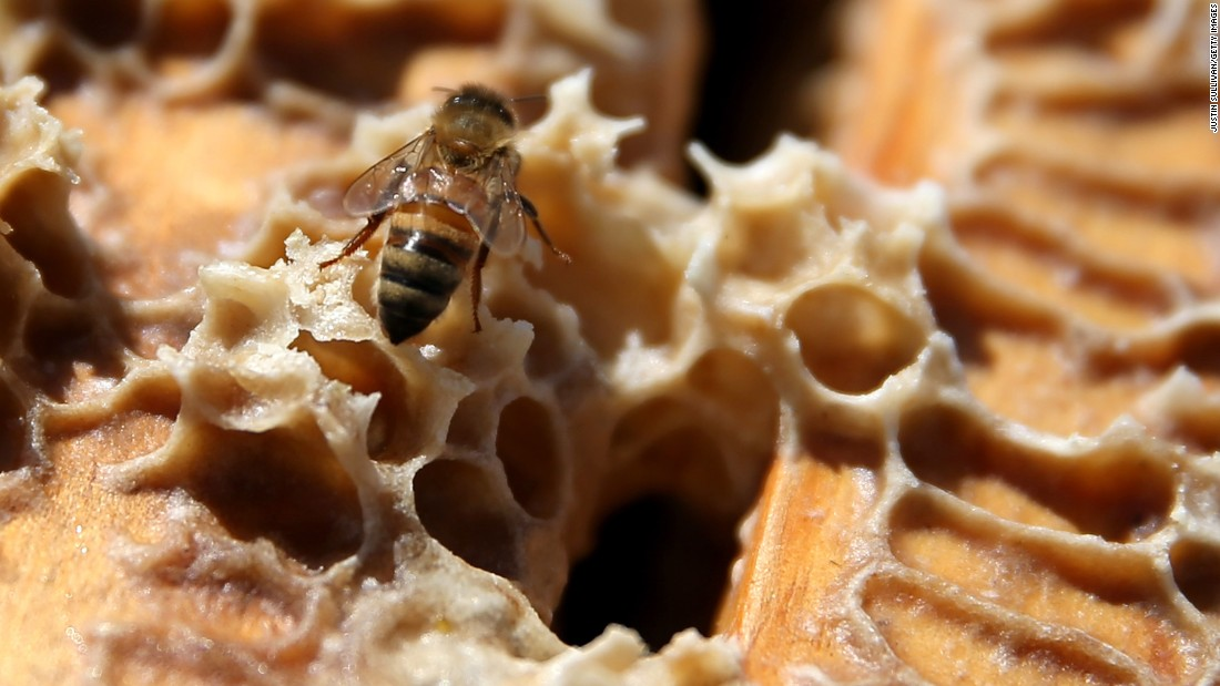 Because of their central role in pollinating several agricultural crops, honeybees are crucial to food security, and their disappearance would have devastating consequences on the economy.